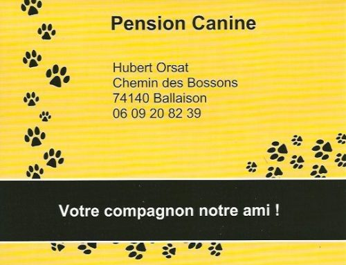 Pension Canine